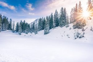 Lovely winter landscape with the evergreen fir forests warmed up by  the orange sun and its rays, while everything is covered in snow. Image taken in Ehrwald, Austria.